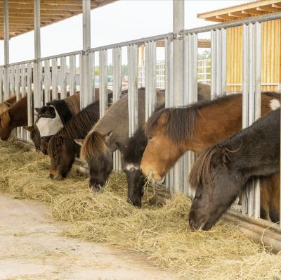 Voerhekken voor paarden