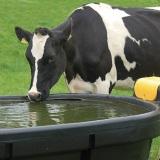 Watervoorziening weiland