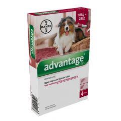 Advantage 250 hond