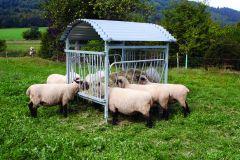 Weide hooiruif voor schapen en geiten