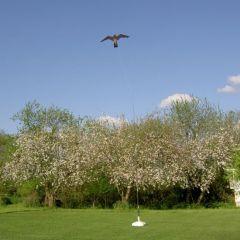 Hawk Kite zwart, vogelverschrikker