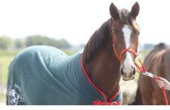 GrandNational Paardendeken Fleece 195cm
