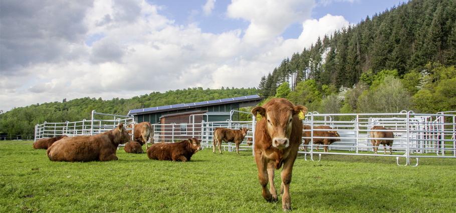 Panels voor paarden en rundvee
