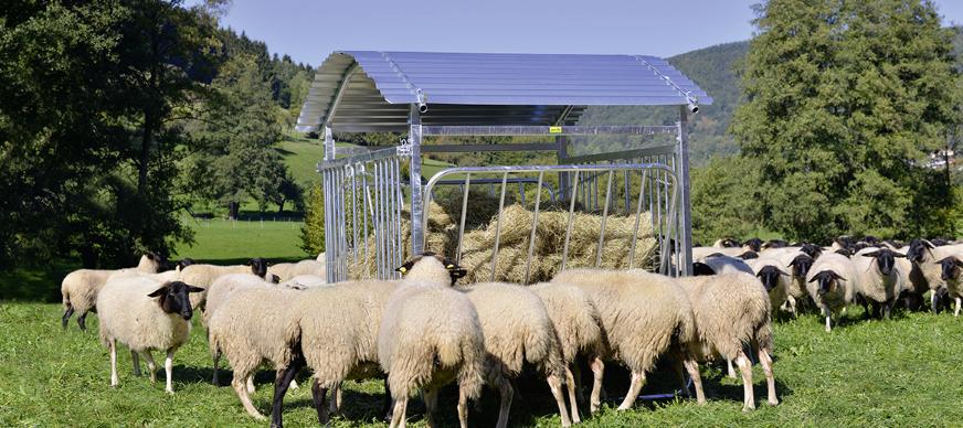 Hooiruiven voor schapen