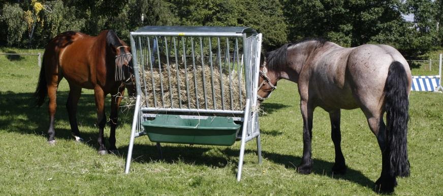 Hooiruiven en weideruiven voor paarden en koeien