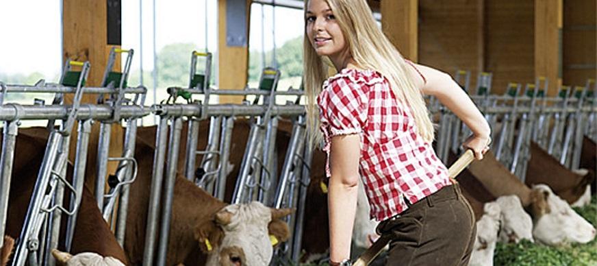 Patura voerhekken, ligboxen en tussenhekken voor koeien