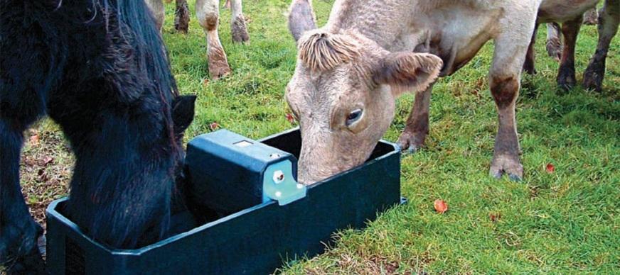 Weidedrinkbakken en vlotterdrinkbakken voor paarden, koeien en schapen