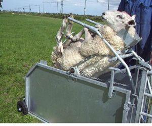 Kantelaar voor schapen, gegalvaniseerd