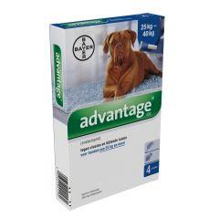 Advantage 400 hond