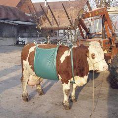Koelift Daisy Lifter - heftuig voor koeien